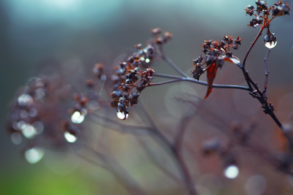 rain drops on a branch