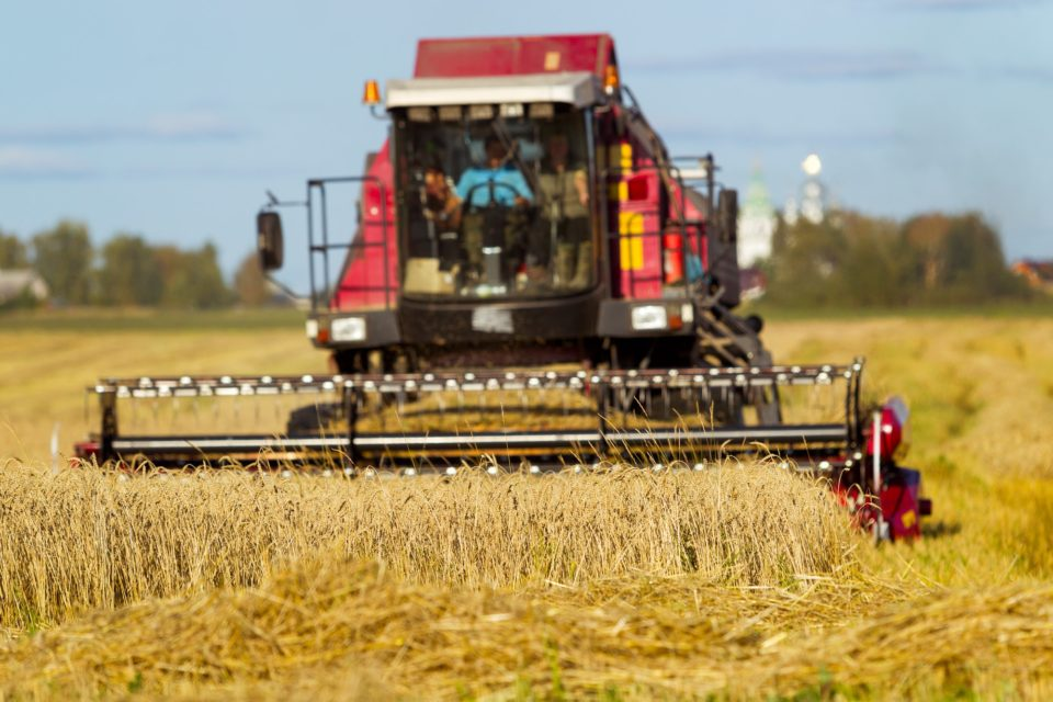 Bread field, harvesting, sunny day