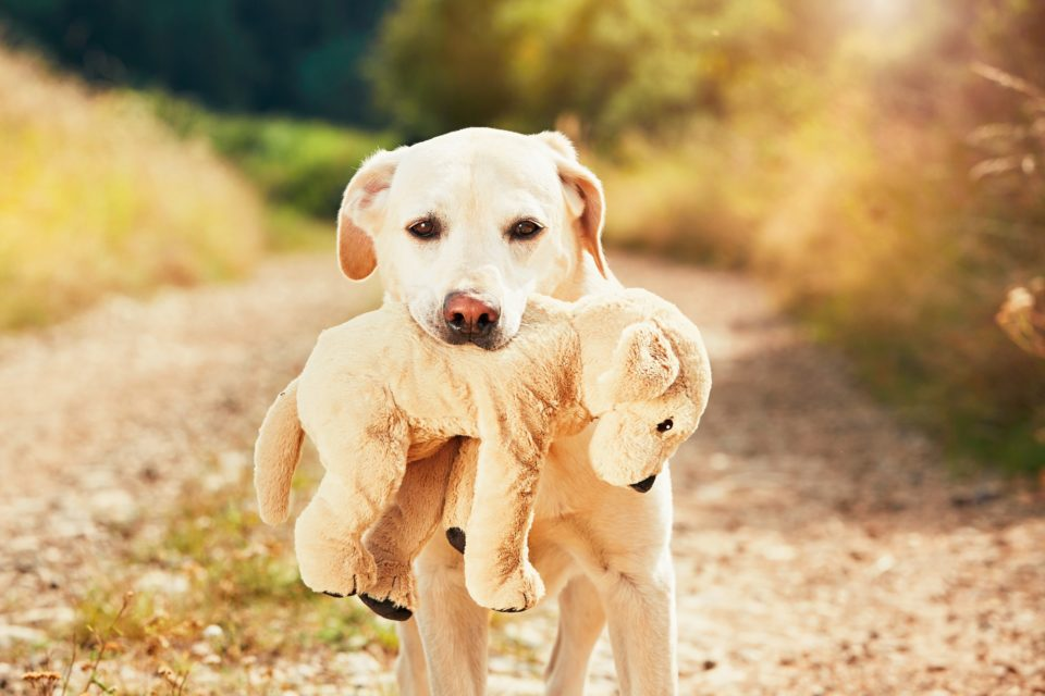 Dog with his dog