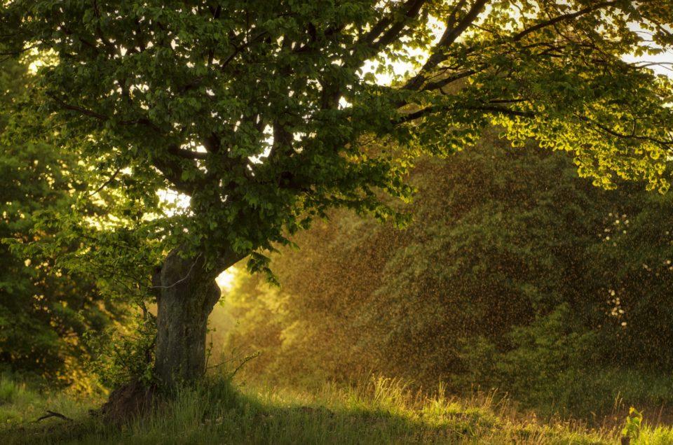 Sun shining in rain drops alt sunset in nature