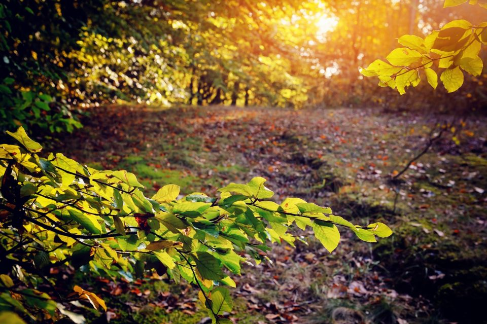Beautiful sunny day in the autumn forest