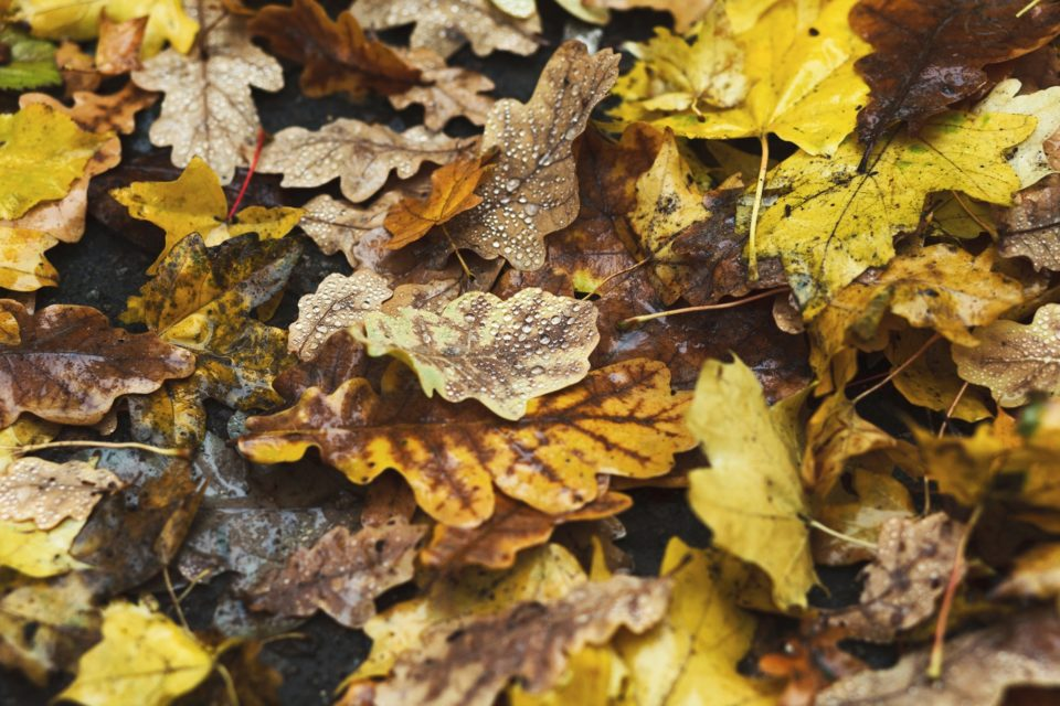 Fall autumn season background, fallen leaves under rain