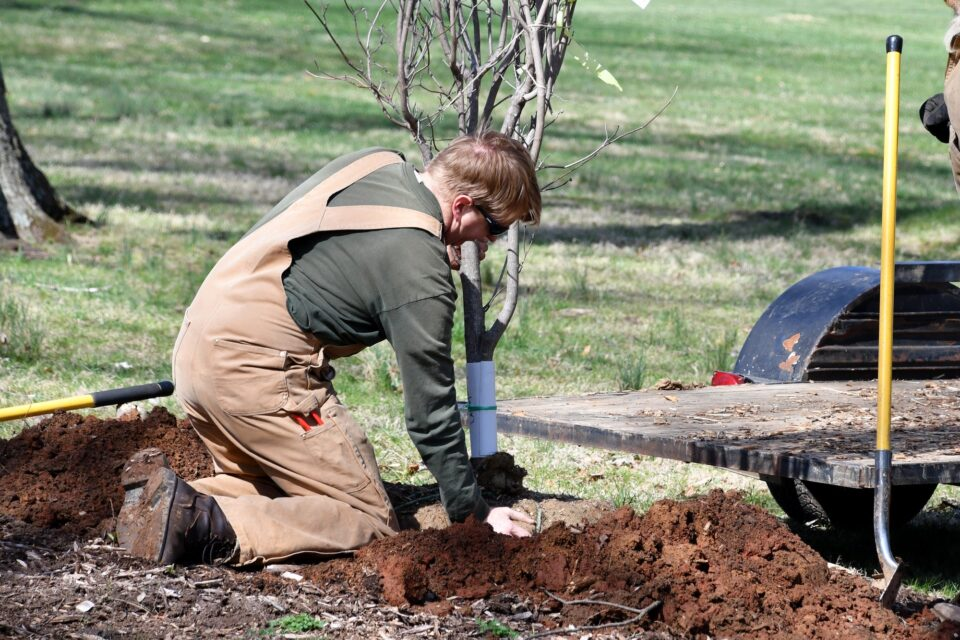 A man planting a tree at the park - real people