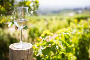 Glass of wine in vineyard