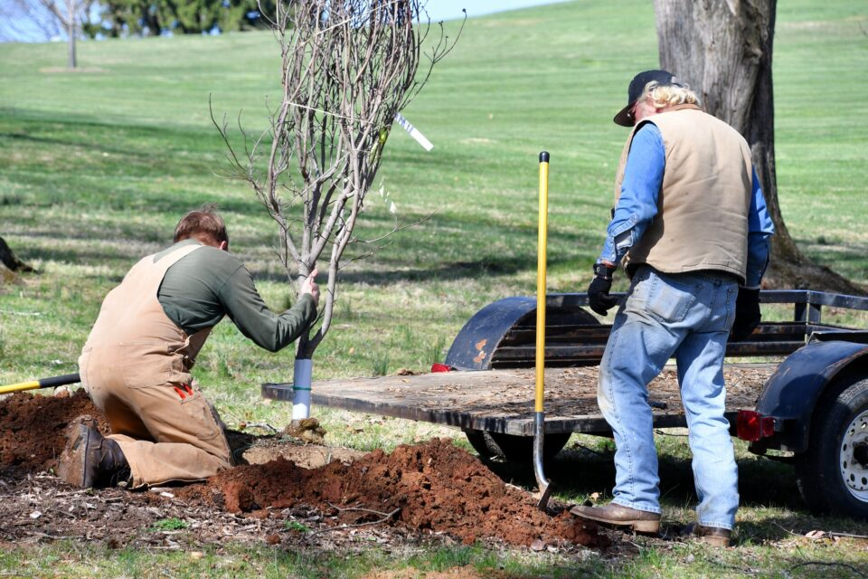 Two men planting a tree at the park - real people
