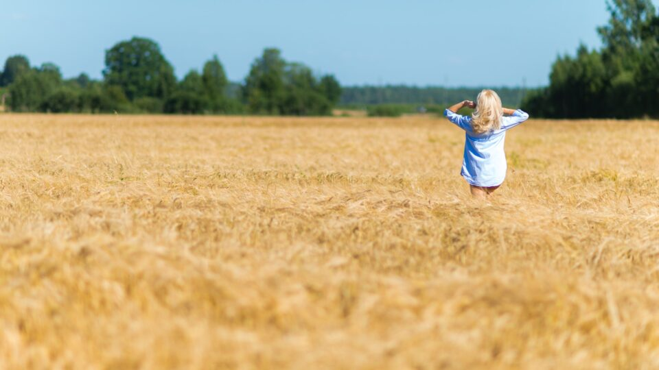 Young, blonde girl in cereals field in a hot autumn day. ❤️ nominated 💔