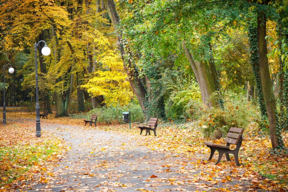Autumnal park in october, Footpath with bench for relaxation
